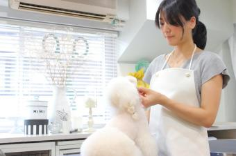 Organic Salon Mimii For Pets 南青山
