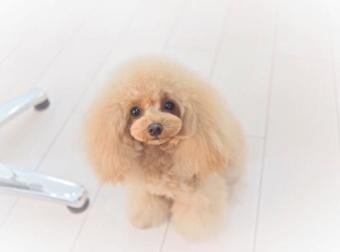 Dog salon Loui's(ルイス)自由が丘