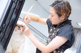Dog Salon Tickle Tickle(出張専門)