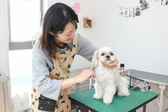 Dog Salon onelife