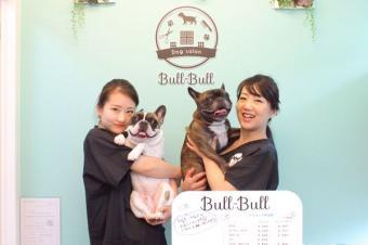 Dogsalon Bull Bull