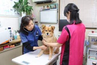 いがり動物病院