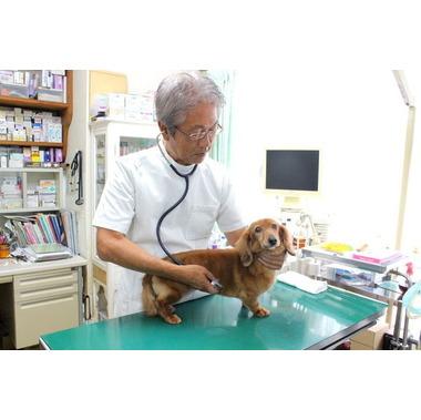六浦動物病院