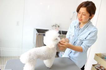 Dog style Lucia