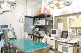 セラピー動物病院(トリミング)