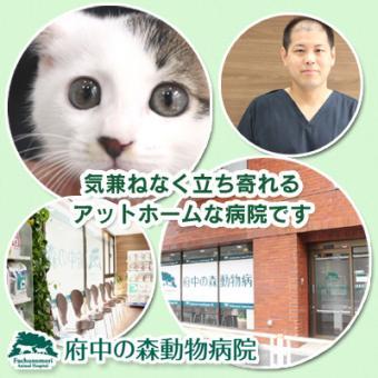 府中の森動物病院