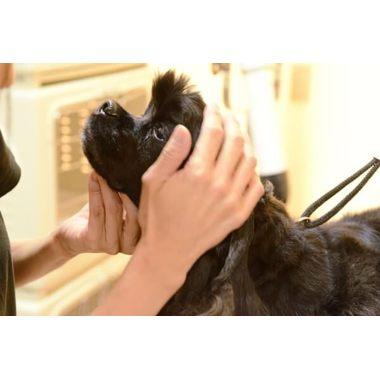 Dog Salon Denny [ペットホテル]