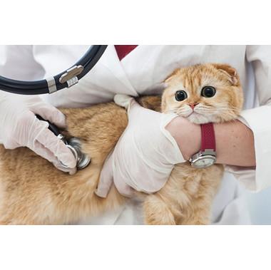練馬獣医科病院