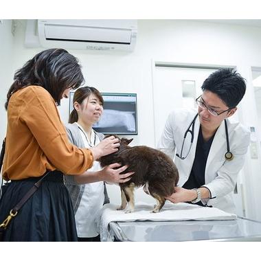 木場きたむら動物病院