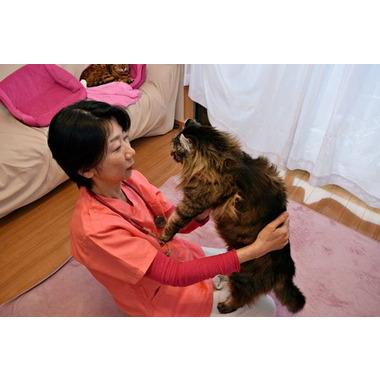 犬猫自然療法動物病院
