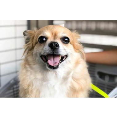 ペットのためのトータルビューティーサロンR(往診専門)