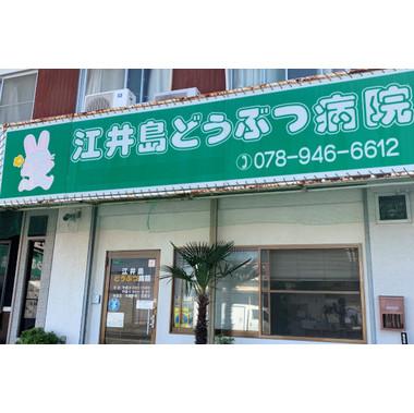 江井島動物病院