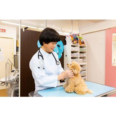 アミール動物病院