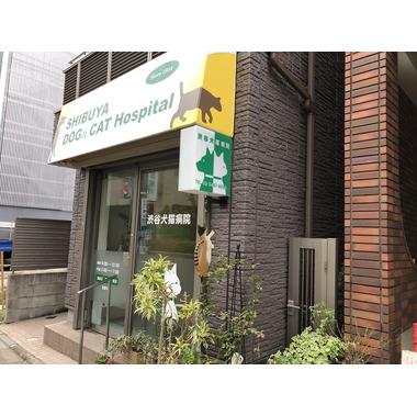 渋谷犬猫病院