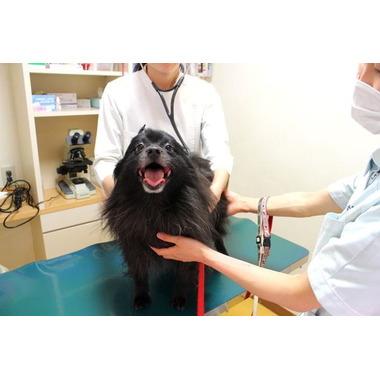 ペット家族動物病院 西五反田病院