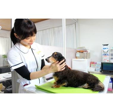 るりあ動物病院(往診専門)