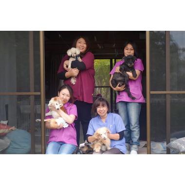 PET CARE HOME Lyuca