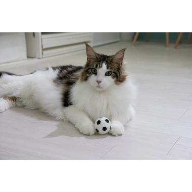 猫専門プレミアキャットホテル&スパ