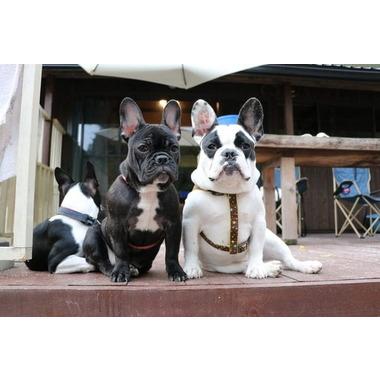 Dog village greentail