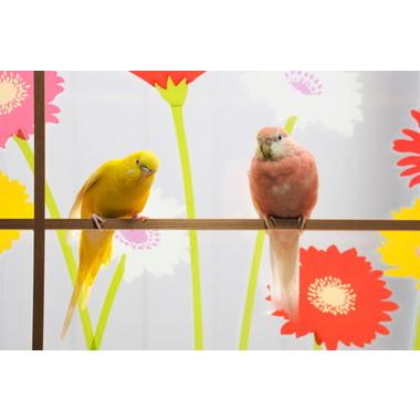 鳥専用ペットホテル ラ・ペルーシュ・ジョーンヌ 黄色いインコ