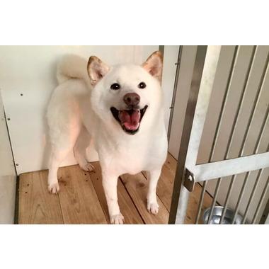 ライトマン京都警察犬訓練所