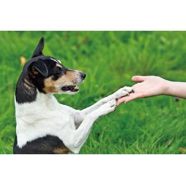 Dog Training GINGA