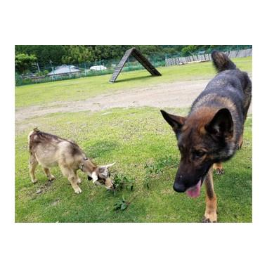 肥薩警察犬訓練所