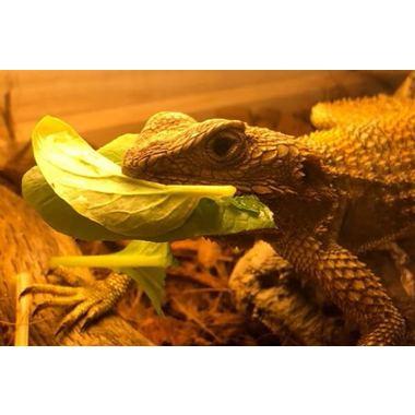 爬虫類カフェ バー&サロン レプタイム
