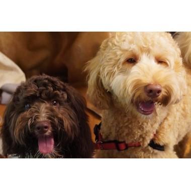 Dog salon Leash