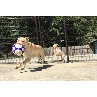 DOG COTTAGE RUN-RUN