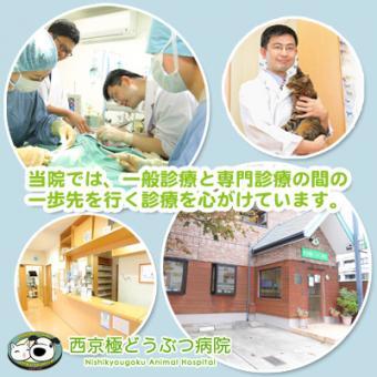 西京極どうぶつ病院