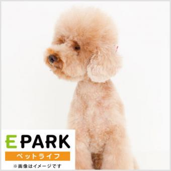 Pet Salon an.zoo(アン・ズー)