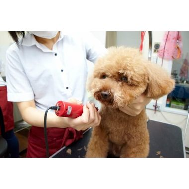 WORLDWIDE PET SPA&HOTEL 青葉台本店
