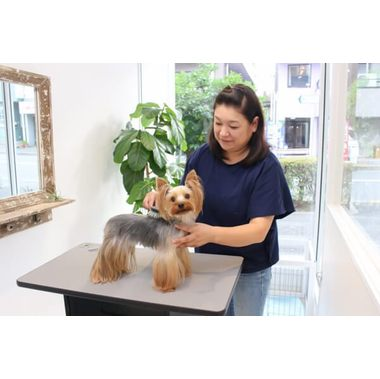 GROOMING SALON ROOTS
