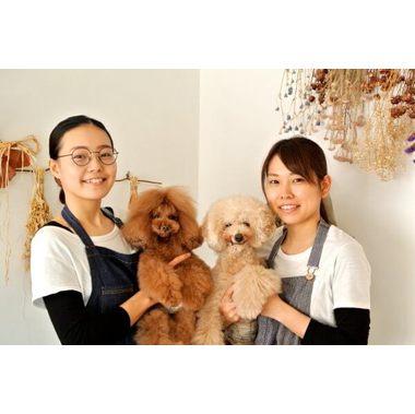 Dog Room MoBuCa