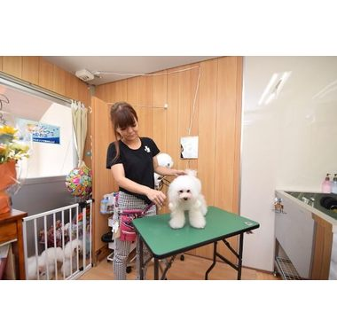 Dog Salon Milky Pua