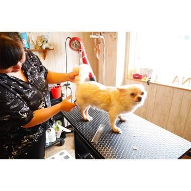 Dogrooming Aina