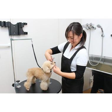 BASE Dog Training School