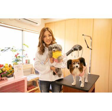 Dog Salon mignon