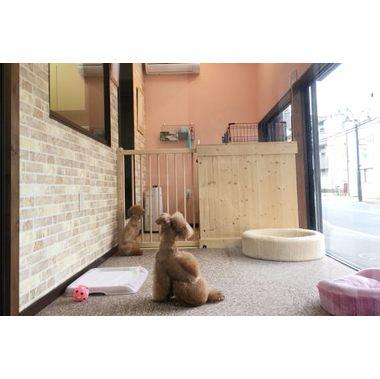 犬猫専門店タケダ
