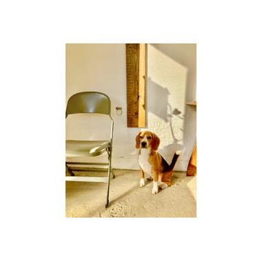 Raft dog grooming salon(ホテル)