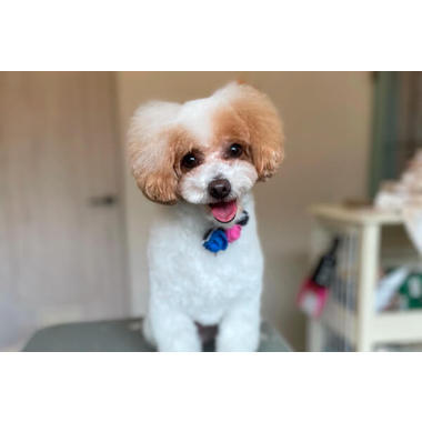 dog salon petit bebe*