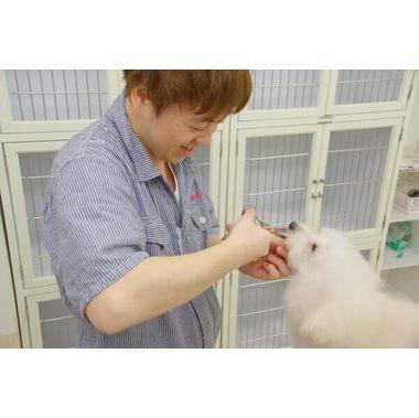 Dog Salon Zero