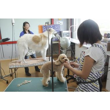 Dog Salon JACK-SON