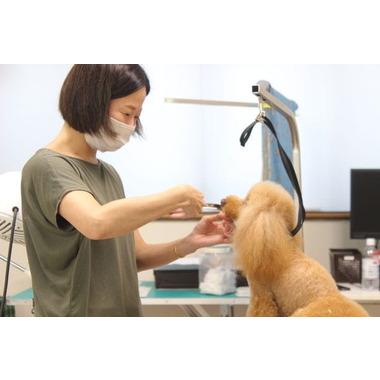 Dog Salon Aroma