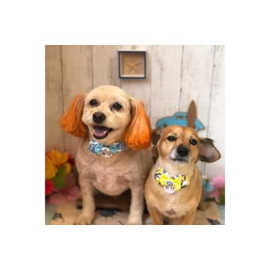 Dog salon Lise