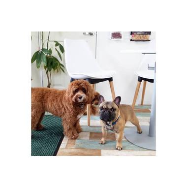 Grooming & DogHotel【HUG】