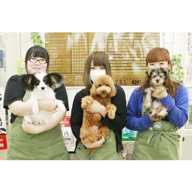 ペットショップノア 竜ヶ崎店