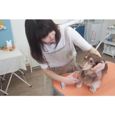 Dog space 晴 -haru-