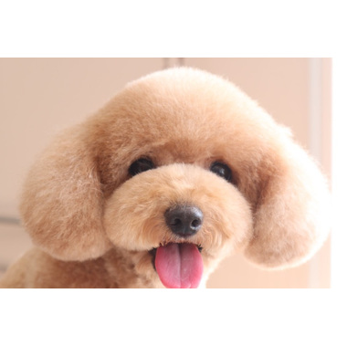 dog salon Reborn